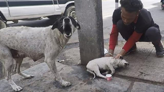 Mother dog cries for help for her wounded puppy. Watch the rescue and reunion!