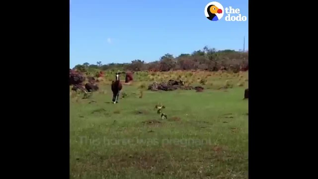 """Pregnant"" horse appears frantic with no baby. seconds later, farmers hear noises in ant hole"
