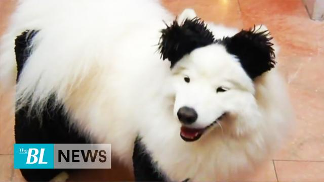 Halloween dogs dress up, a treat on Capitol Hill