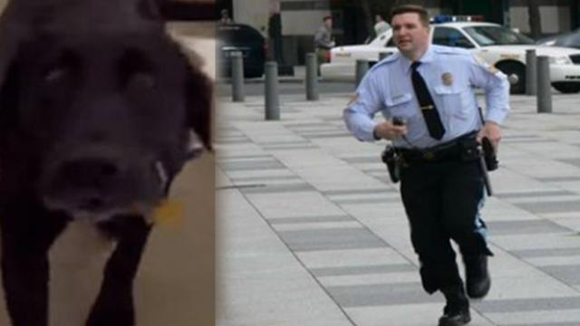 Frantic Labrador begs cop to follow him – seconds later, both are heroes