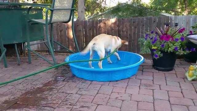 Dog caught trying to fill up her doggy pool all herself. Her silly method has Internet rolling with