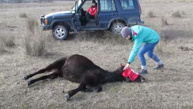 A vet freed this chained horse, not realizing he would get the thank you of a lifetime