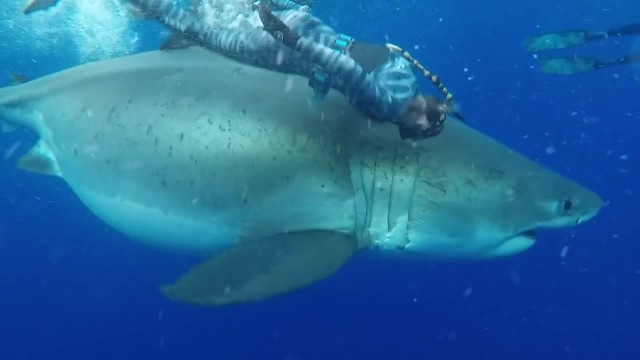 Woman swims alongside 20-foot great white shark, and the whole thing is caught on video