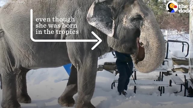 Lonely Elephant In Zoo Has Spent Over 11 Years In A Glass Cage Without Friends: Animal Imprisonment