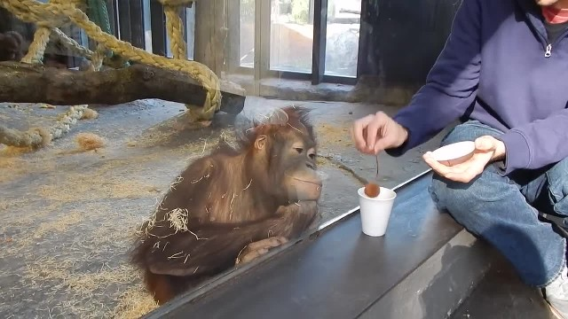 Monkey Sees A Magic Trick