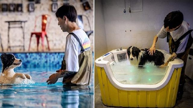 Chinese Man Builds $500,000 Mansion For His Dog Who Made Him Rich