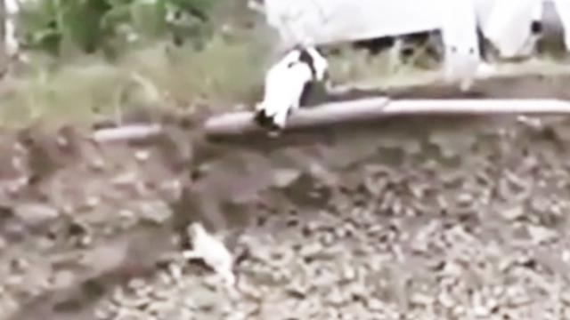 Tiny abandoned puppy trapped in a dangerous ditch gets rescued by a fearless cat