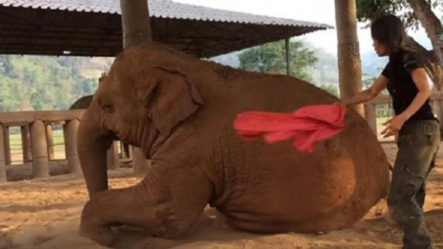 Lady sings to elephant, heartwarming response stuns internet