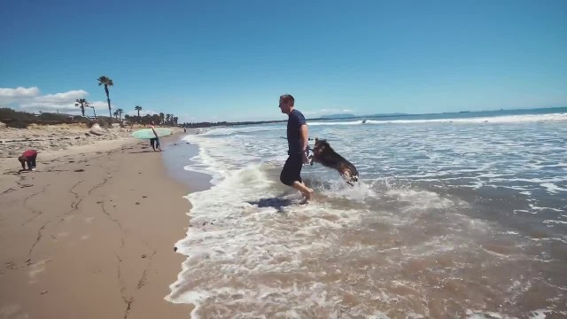 Dog freed from being chained up his entire life, sees the ocean for the first time and reaction goes