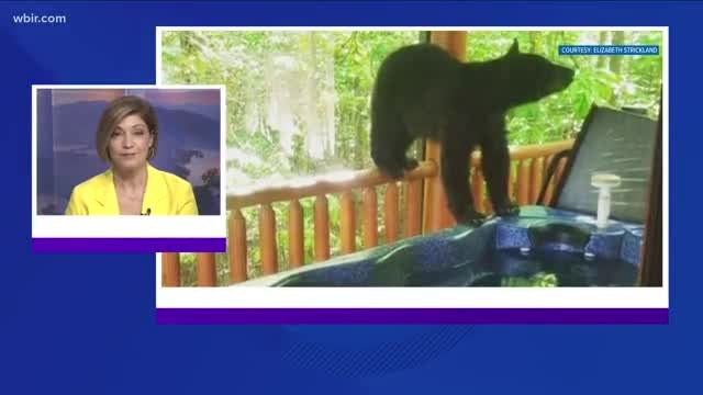Bear takes a dip in hot tub at Gatlinburg cabin