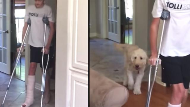 Funny dog mocks human brother's broken leg 'walk' behind his