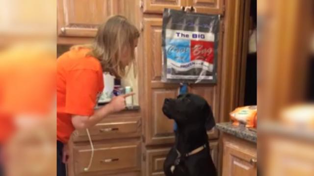 Guilty Labrador got busted by mom, has an adorable apology for the mess he made