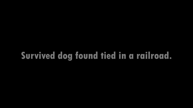 Man Sees Puppy Tied To A Train Track And Realizes He Was Abandoned There On Purpose