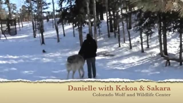 Giant wolf plops down beside her, but watch what happens when they make eye contact