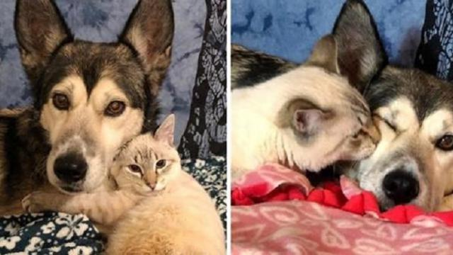 Kitten who can't walk, finds special foster mom to help turn his life around