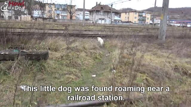 Lost Dog Finally Found But Left Heartbroken When Owner Didn't Want Him Anymore