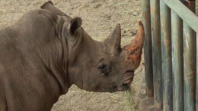 Rhino won't be punished after touching toddler who entered its enclosure