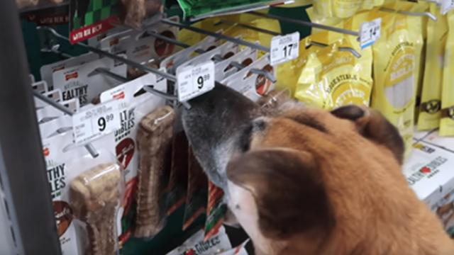 Man brings elderly homeless dog to pet store and buys him everything he touches