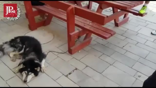 There Was No Denying Who This Dog Was as Soon As the Music Started