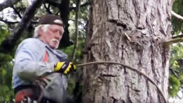 He climbs 40 feet up a tree — But look what he finds at the
