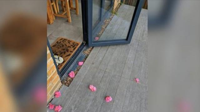 Woman keeps finding pink flowers on her porch – one day she finally
