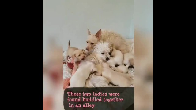 Two Single Moms Were Found In Alley Raising Their Puppies Together