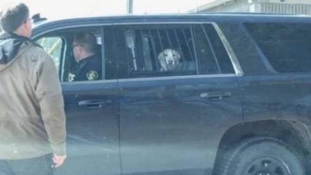 Dog taken away by police after caught chasing deer, becomes social media sensation