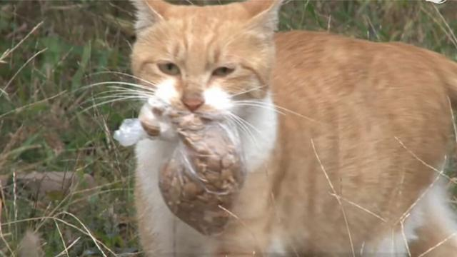 Homeless cat doesn't take food unless it's in a plastic bag –