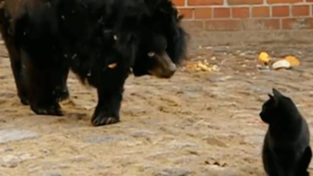 Cat and bear friends for seven years, but when cat's temporarily separated from him, he can hardly t