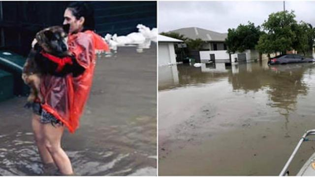 Woman wades into waist-deep flood waters to rescue dogs abandoned by their owners