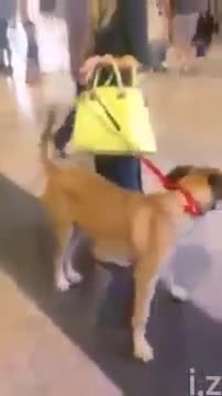 Dog stops and stares at the owner he hasn't seen in 3 years, but the real reaction is coming...