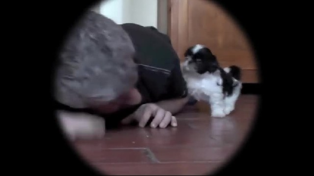 Man lies on the floor next to his new puppy. Get ready to see their heartwarming interaction