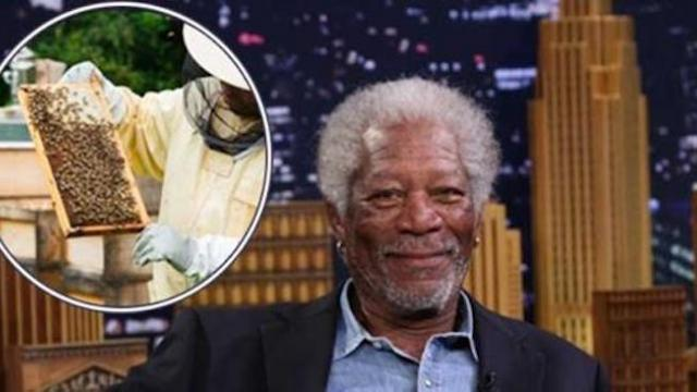 Morgan Freeman converted his 124 acre ranch into a bee sanctuary to help save bees