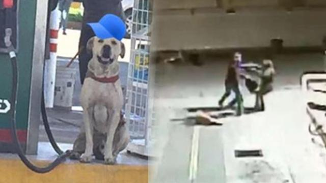 Stray dog adopted by gas station saves employee during assault