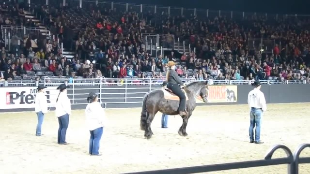 This Horse Hears Its Favorite Song Come On And The Crowd Goes Wild!