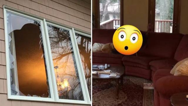 Couple return from vacation to find window smashed—saw unusual culprit lounging on sofa
