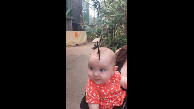 "Butterfly lands on baby's head & opens into magical ""Hat"" make mommy's eyes pop"
