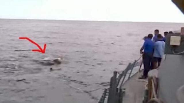 Navy confused by large mass in water. The minute they recognize it they all jump overboard