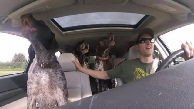 Car full of dogs start freaking when they find out where they're going and you just have to see it