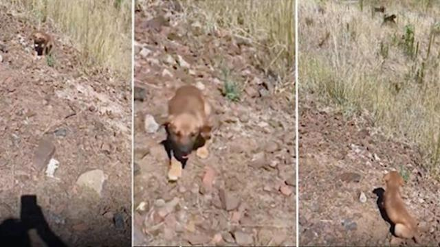 Desperate puppy begs construction worker for help only to have more dogs emerge from grass