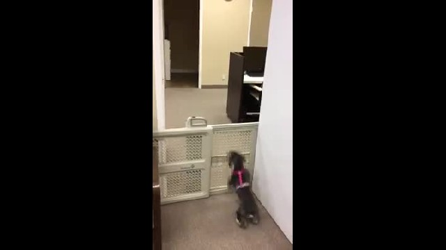 Dog sees sister trying to break the rules and decides to help