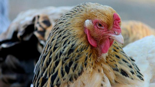 China reports H5N1 bird flu outbreak, US uses military bases to quarantine 1,000