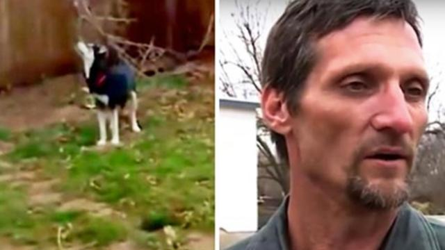 Man receives message 6 years after dog was stolen from backyard that gives him goosebumps