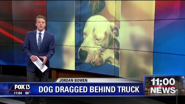 Dog recovering after being dragged by truck in Hernando County