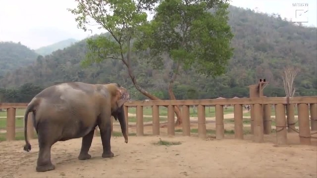Blind elephant slowly approaches her new family. But how they greet her—I can't look away