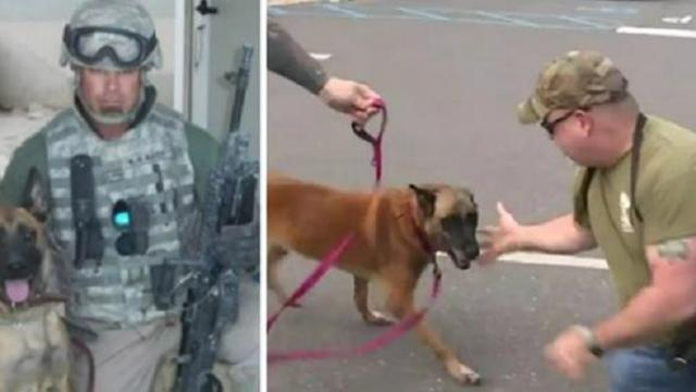 Retired bomb-sniffing dog reunites with her handler after being apart for 7 years