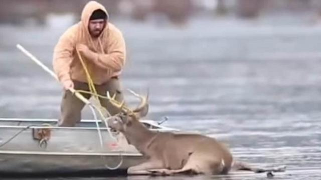 Guy rushes onto thin ice to rescue deer stranded on frozen lake, but then the ice begins to crack