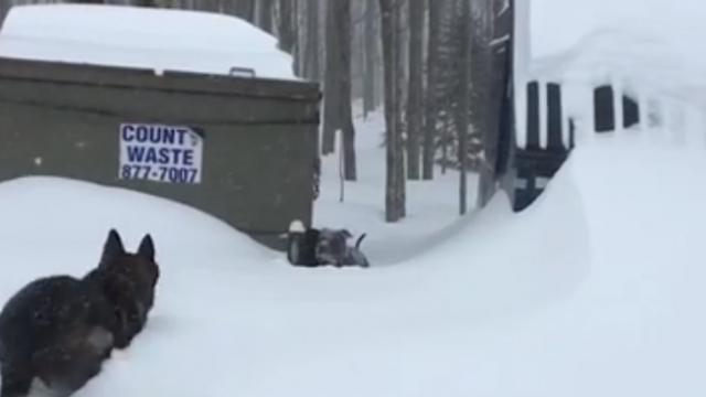 Dog trapped in snow can't get himself out. Suddenly sees a friend rushing to save him