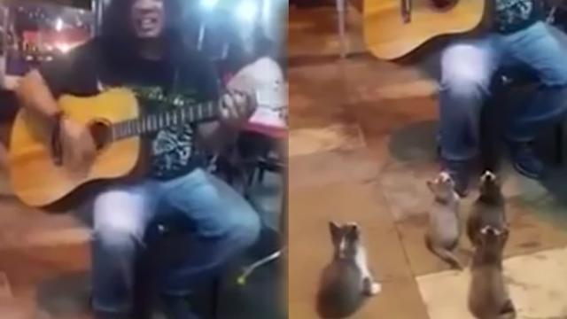 This street musician was about to quit, until these tiny kittens started listening
