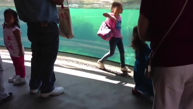 Sea lion plays tag with a little girl, what happens next has everyone in disbelief
